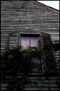 Magenta Window.jpg