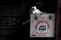 Preservation Hall Cat.jpg