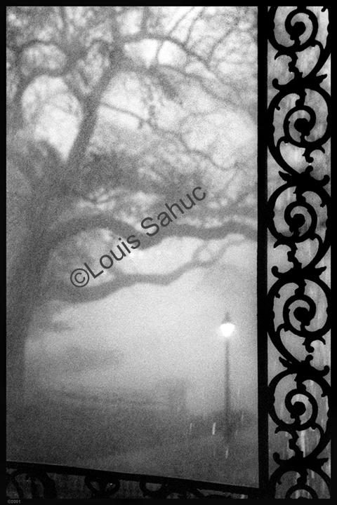 A Foggy View.JPG