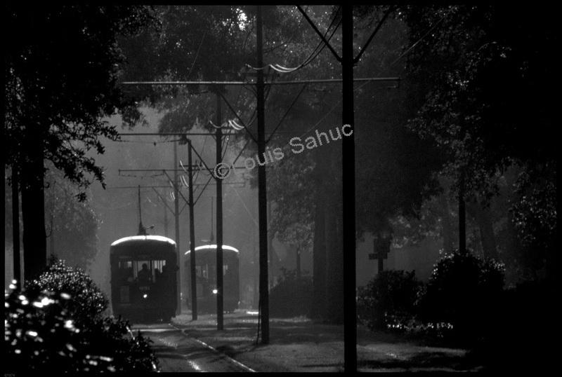 Misty Mornings.jpg